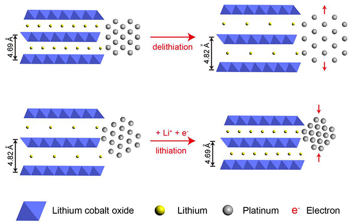 Bottom: Platinum atoms attached to layers of lithium cobalt oxide contract when electricity is applied, boosting platinum catalytic efficiency by 90 percent. Top: Removing electrons separates the atoms and lowers efficiency by 40 percent. (Image courtesy of Haotian Wang)